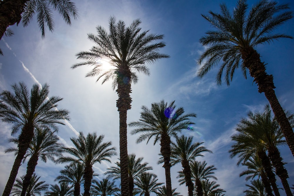 Property Grounds, Palm Springs RV Resort