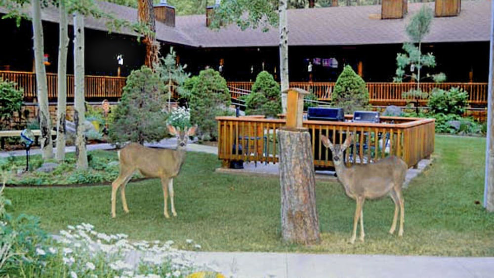 Pet-Friendly, Shadow Mountain Lodge and Cabins