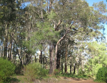 B And B Accommodation Margaret River Wa Edge of the Forest Deals & Reviews (Margaret River, Australia) | Wotif