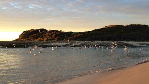 Private beach, windsurfing, surfing, fishing