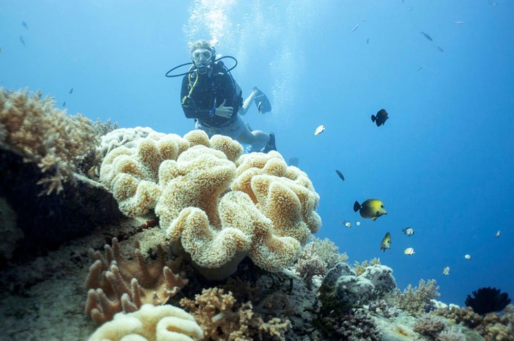 Book manta dive gili air gili air idn lombok hotel deals - Manta dive gili air ...