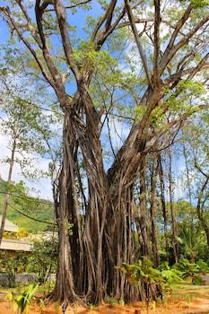 Bel Ombre Road, Beau Vallon, Mahé, Seychelles.