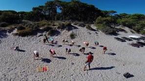 Ubicación cercana a la playa, yoga en la playa y vóley playa