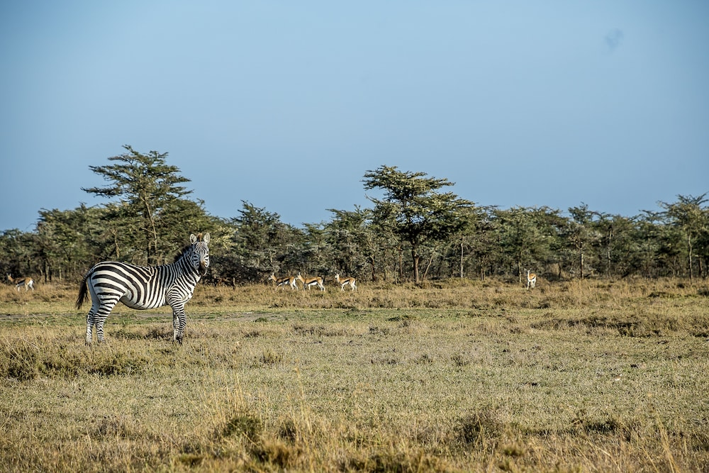 Safari, Mutara Camp