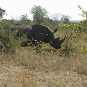 야생동물 관찰