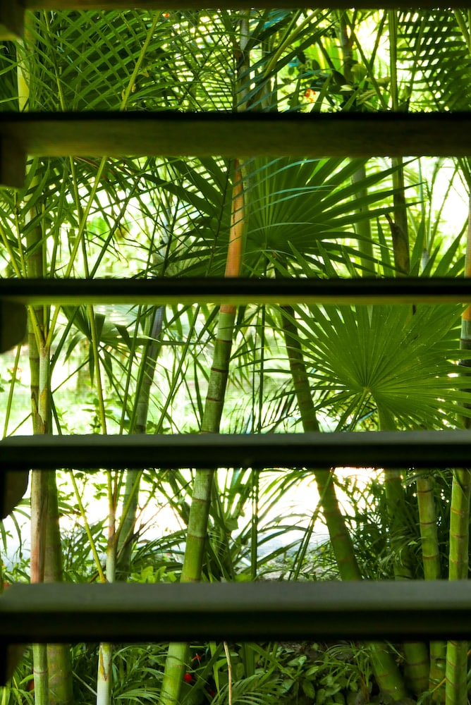 View from Room, Omega Tours Adventure Company & Eco Jungle Lodge