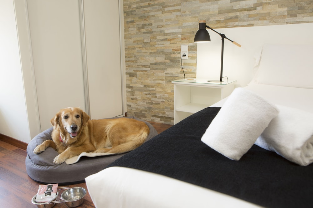 Pet-Friendly, Casual del Teatro Madrid