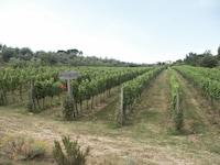 Villa Le Piazzole (9 of 51)