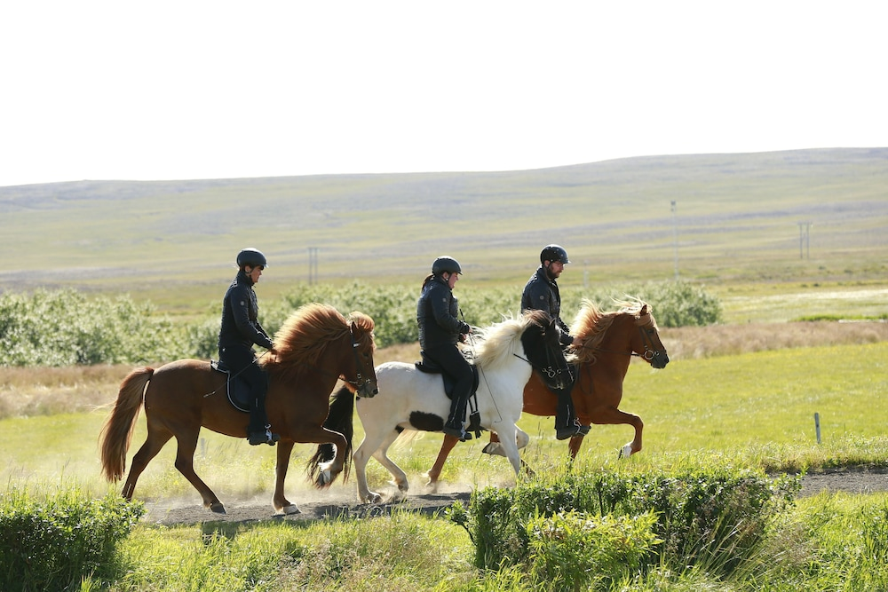 Horse Riding, Gauksmýri Lodge