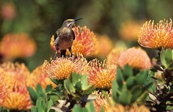 R43, Hermanus, 7200, South Africa.