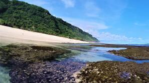 Gần bãi biển, lặn có bình dưỡng khí