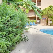 Beachview Condominiums Palm Tree Pathway 303