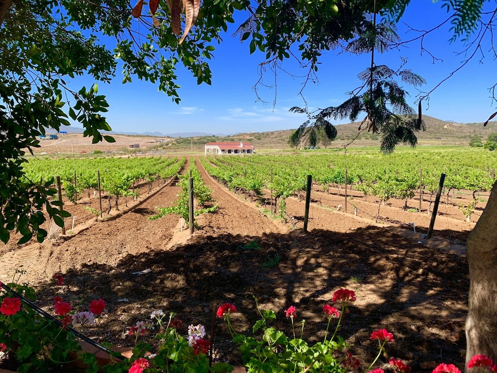 Vineyard, Rancho El Parral