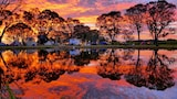 Coonawarra Bush Holiday Park - Coonawarra Hotels
