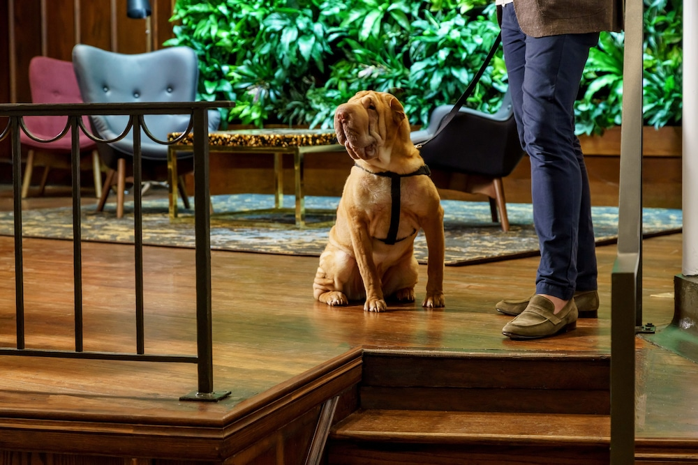 Pet-Friendly, Distrikt Hotel Pittsburgh, Curio Collection by Hilton