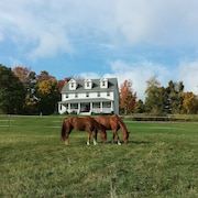 Farm House on Beautiful old Horse Farm!!