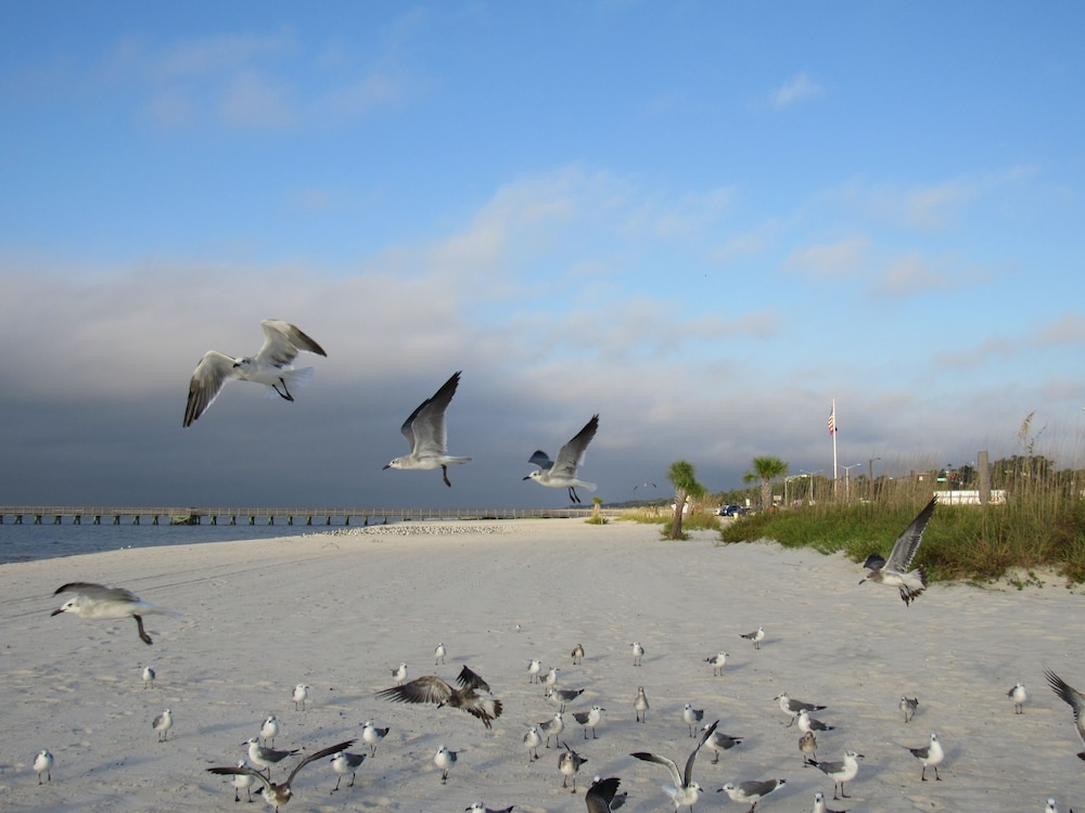 Beach, Gulf Palms Cottage.....Walk to beach, downtown, restaurants, splash pad & more!