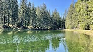 Naturpool
