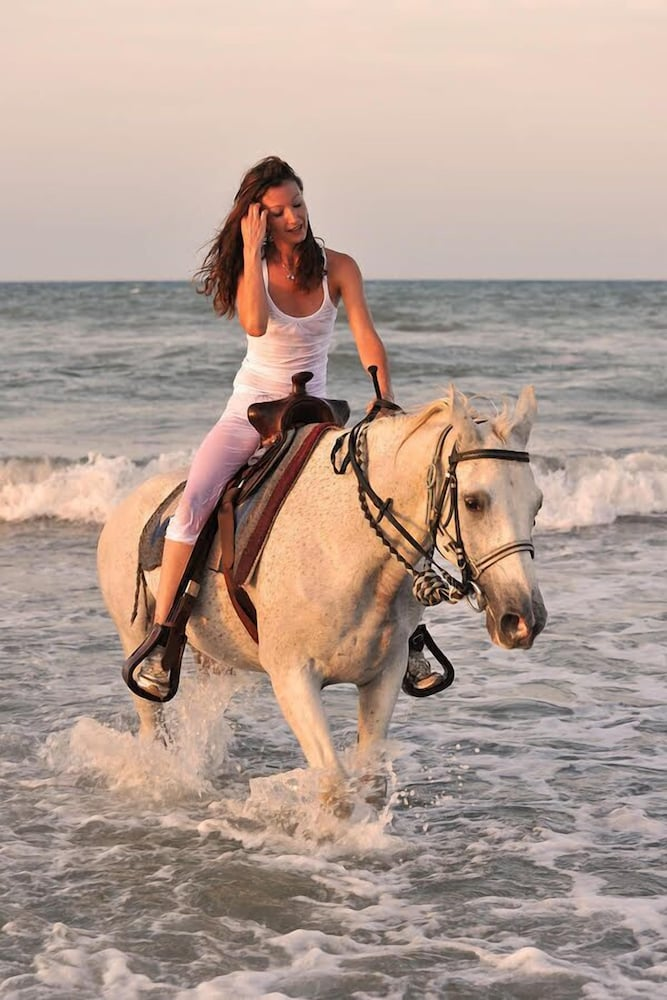 Horse Riding, Quality Inn near Hearst Castle