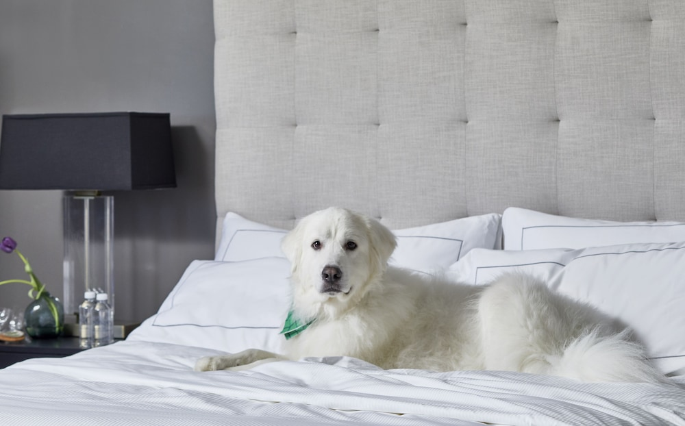 Pet-Friendly, Cumberland House Knoxville, Tapestry Collection by Hilton