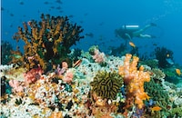Baros Maldives (19 of 74)