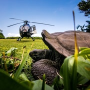 Helicopter/Plane Tours