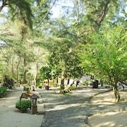 Quang cảnh vườn