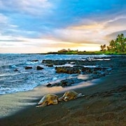 Turtle Hut II at Punalu'u Black Sand Beach! More Five Star Ratings! Reviews!!