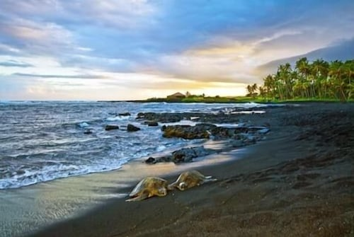 Turtle Hut I at Punalu'u Black Sand Beach! More Five Star Ratings!!