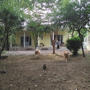 GUESTS & DOGS HOUSE HALE ILIO