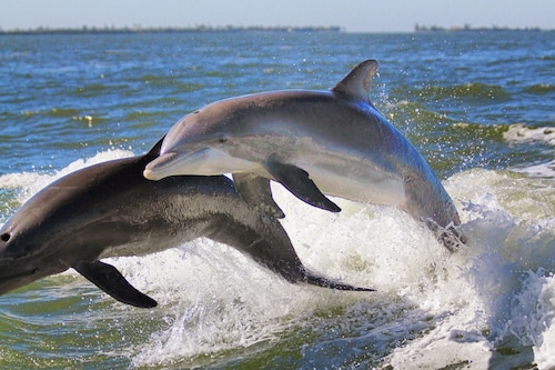 Guaranteed Dolphin Sightings Daily, Pool, 5 Min. Walk to Beach, Perfect Sunsets