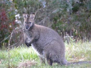 Huon Valley Eco Wilderness Retreat Tasmania Australia