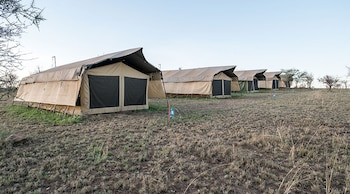 Serengeti Wildebeest Camp