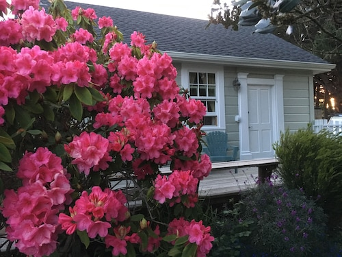 Mendocino Village Romantic Cottage, Walk to All! Full Kitchen, Private, Gardens