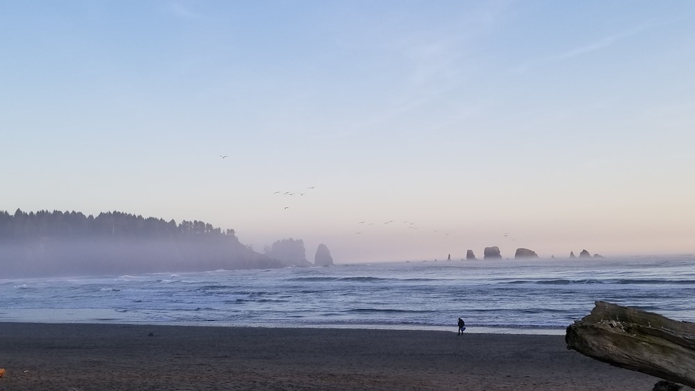 Beach, Closest to Olympic National Park