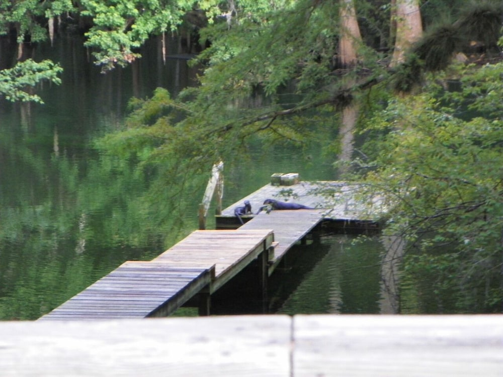 , Ichetucknee River - Riverfront on the Crystal Clear Ichetucknee River