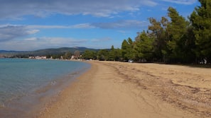 Plage à proximité, chaises longues, parasols, 15 bars de plage