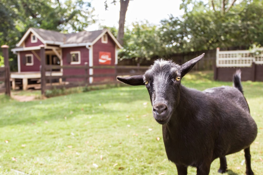Pet-Friendly, The Social Goat Bed and Breakfast