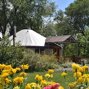 Thanksgiving Cancellation. Book for Bird in Yurt