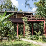 Our Jungle House