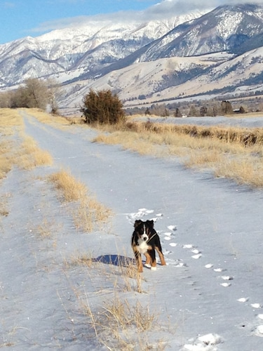 Snow and Ski Sports, Near National Park and Yellowstone River. Full Kitchen, dog Friendly