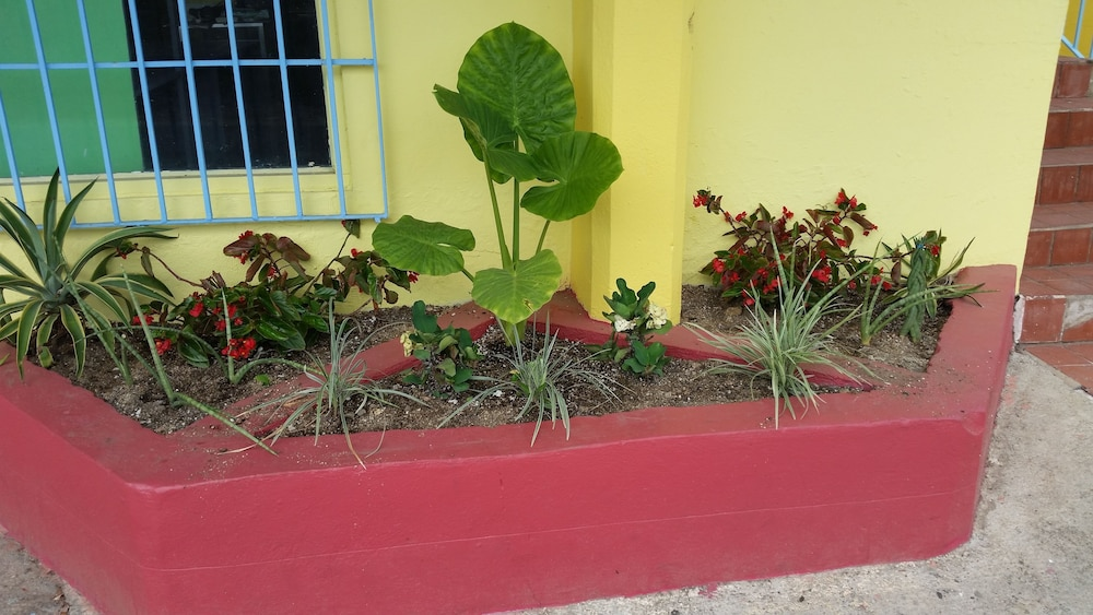 Property Grounds, The Vieques Guesthouse