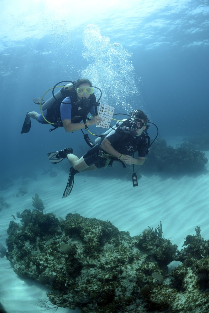 Majestic Elegance Punta Cana - All Inclusive in Punta Cana