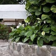 Jardines del establecimiento