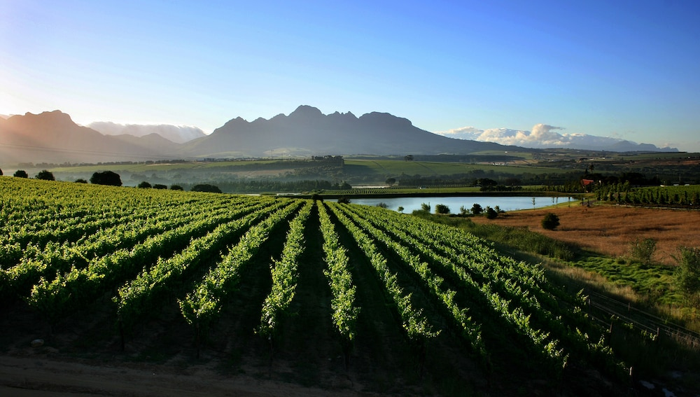 Vineyard, Asara Wine Estate & Hotel