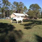 Ocala Spacious Peaceful Apartment on Horse Farm, pet Friendly!