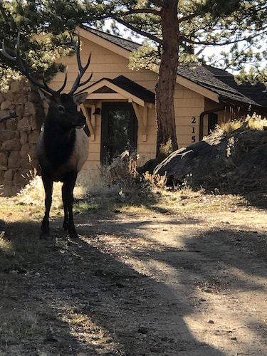 Best Cabins In Estes Park For 2019: Find Cheap $60 Cabins