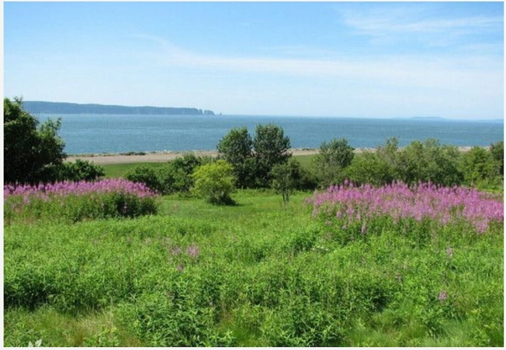Property Grounds, Million Dollar View Cottages, Kahuna Cottage- Parrsboro, Nova Scotia