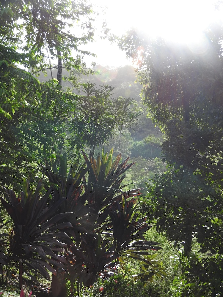 Property Grounds, Tropical Rainforest Mountain House Near Volcano Arenal. Private and Safe