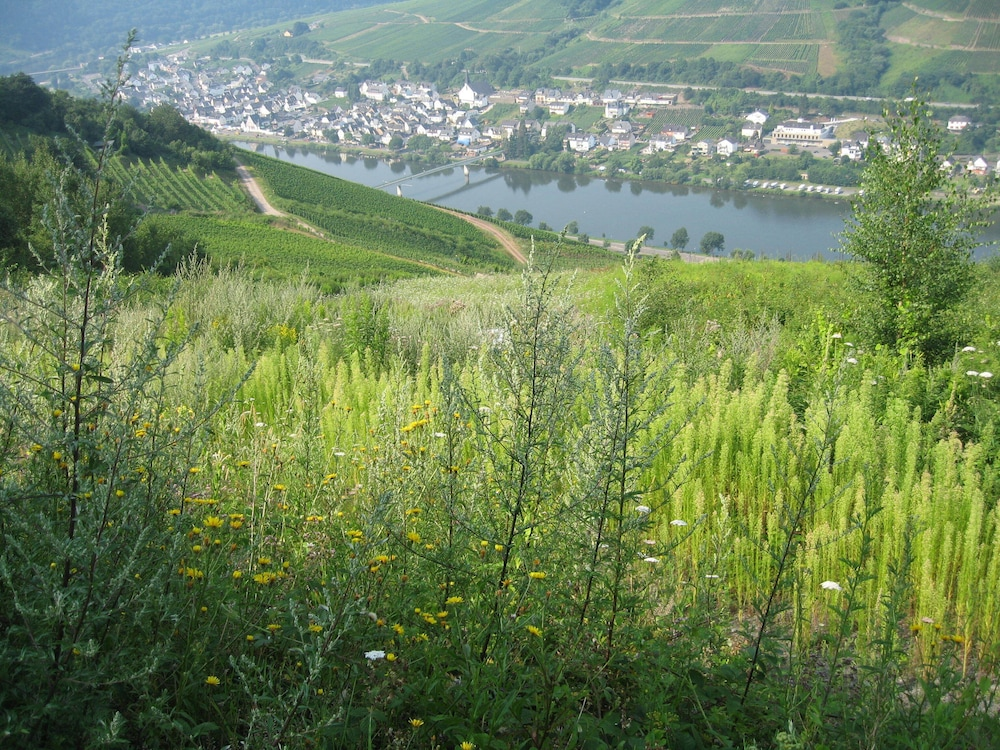 Property Grounds, Holiday apartment with a beautiful view of the Moselle